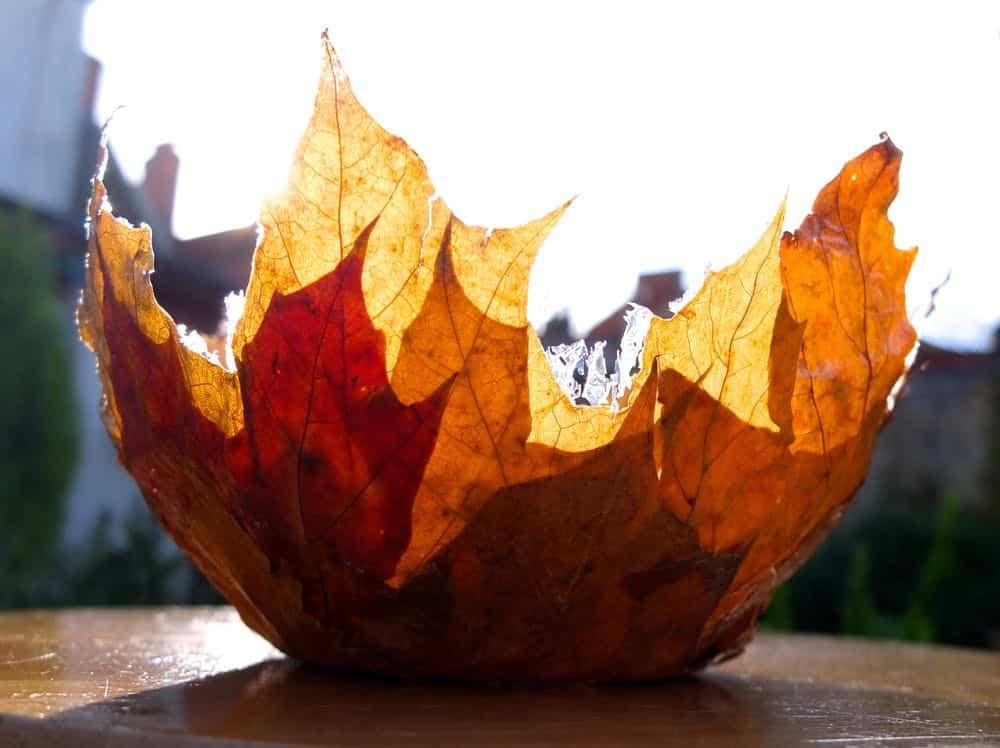Leaf Bowl Craft